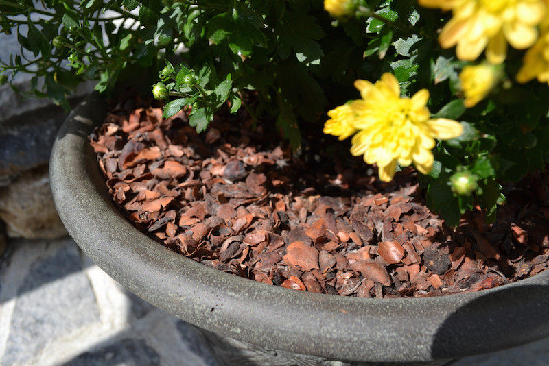 Fonte: http://terracemulch.com/products/cocoa-shell-potting-mulch